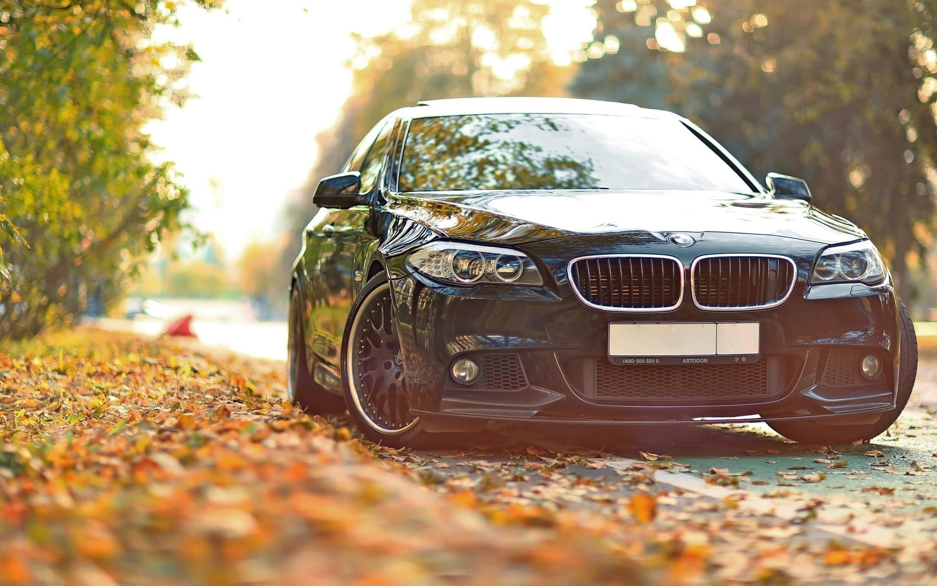 BMW autumn